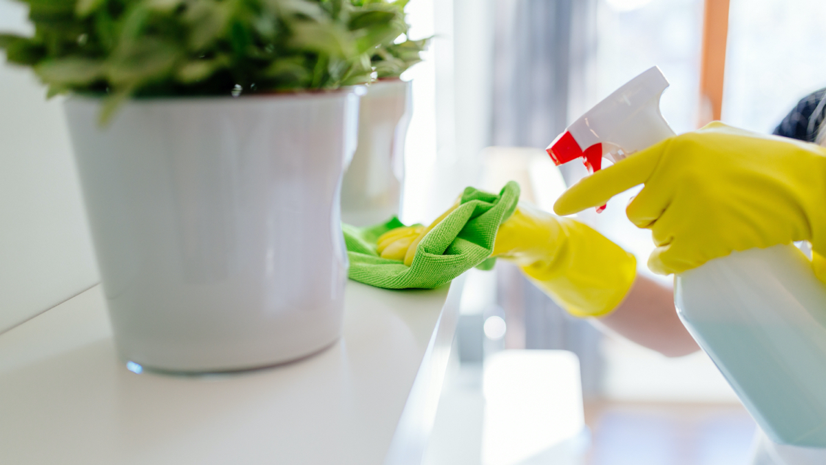 About arlo cleaning services